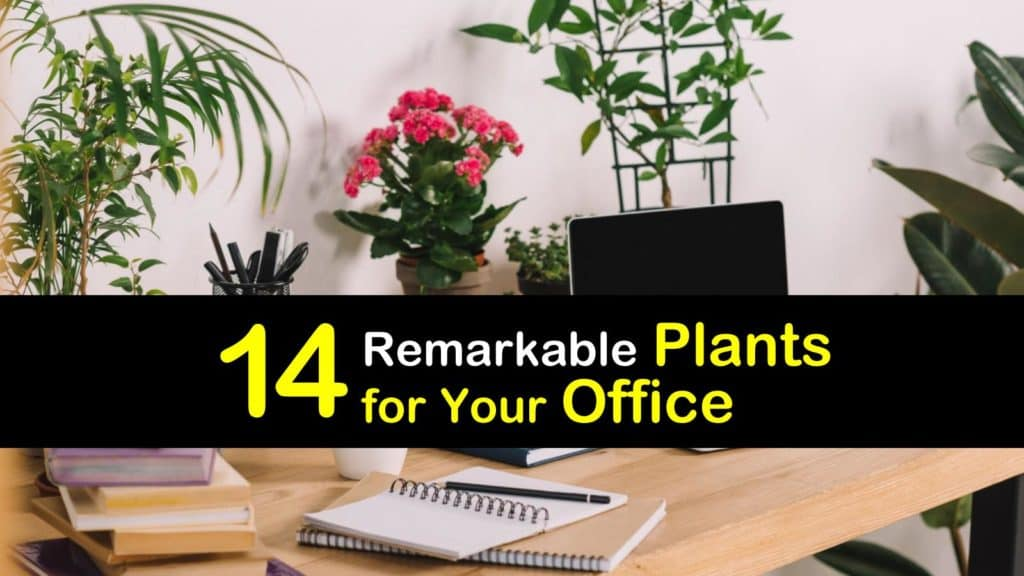 Plants for Your Office titleimg1