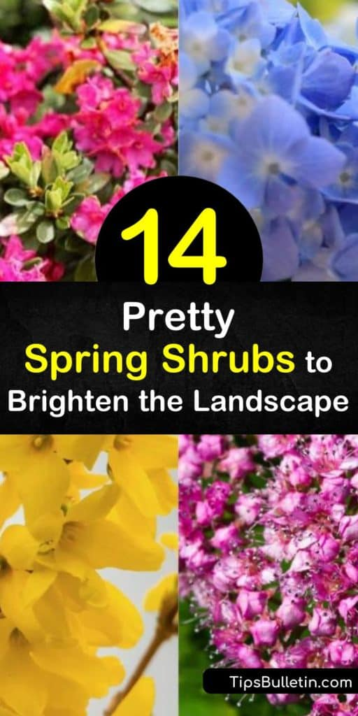 Find the perfect spot in your yard and garden beds to make way for pink flowers and white flowers. This list of spring flowering shrubs includes plants like viburnum, quince, rhododendron, and azalea that only require a quick prune and full sun. #spring #flowering #shrubs