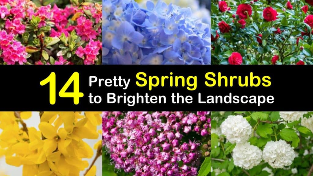 Spring Flowering Shrubs titleimg1