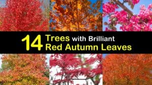 Trees with Red Leaves titleimg1