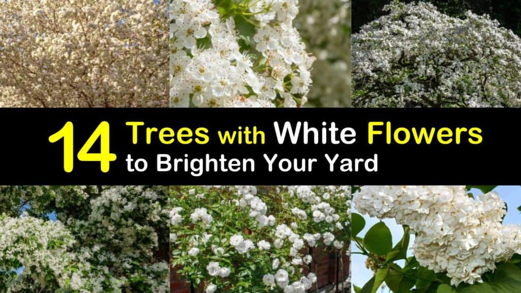 Trees with White Flowers titleimg1