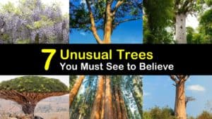 Unusual Trees titleimg1