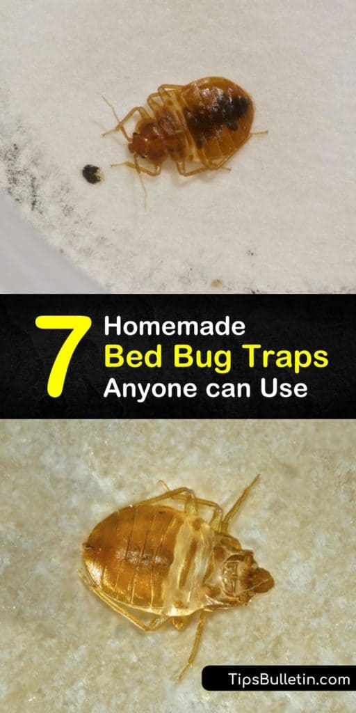 Become a pest control master that turns a bed bug infestation into the thing of the past using DIY bed bug traps, pesticides, interceptor, bed bug monitors, and more. These bed bug traps work to keep the pests at bay and prevent them from returning for good. #bed #bug #traps