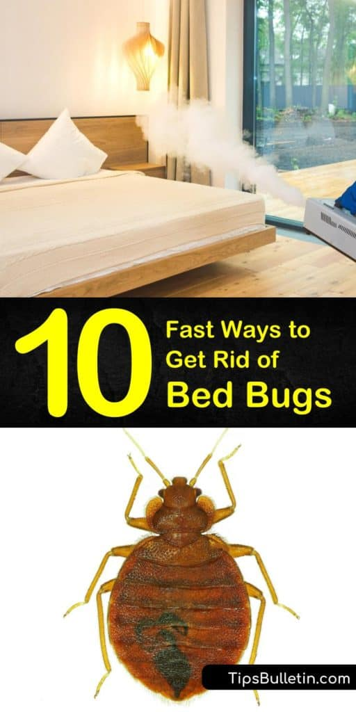 Fastest Ways to Get Rid of Bed Bugs