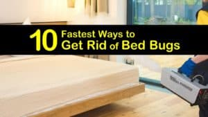 Fastest Ways to Get Rid of Bed Bugs titleimg1