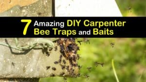 Homemade Carpenter Bee Traps and Baits titleimg1