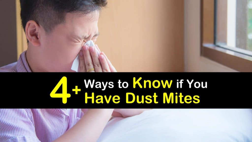 How do You Know if You have Dust Mites titleimg1