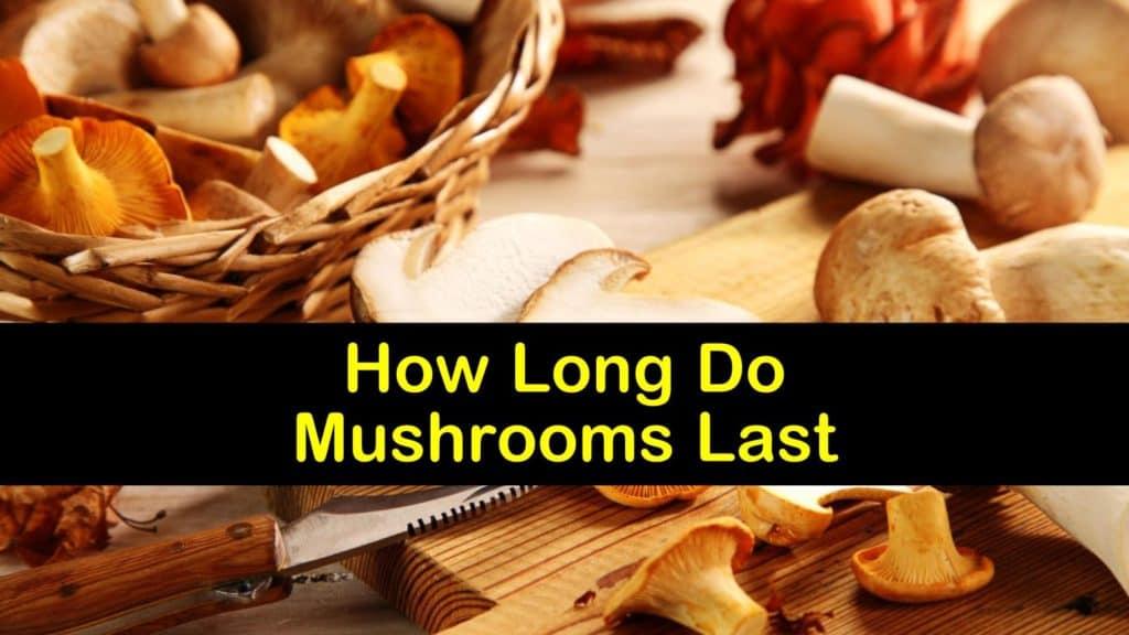 How Long Do Mushrooms Last titleimg1