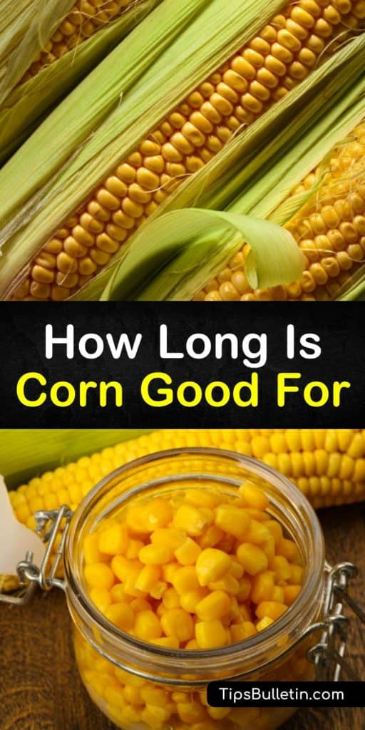 Discover how long fresh corn is good for and the best ways to store it for the short and long term. Do not shuck sweet corn until you're ready to eat it, store cooked corn in the fridge, and freeze corn in freezer bags for extended shelf life. #howlong #corn #goodfor