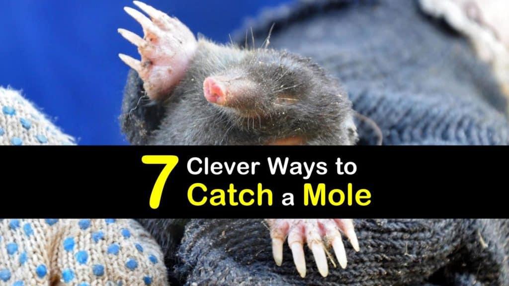 How to Catch a Mole titleimg1
