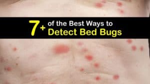 How to Detect Bed Bugs titleimg1