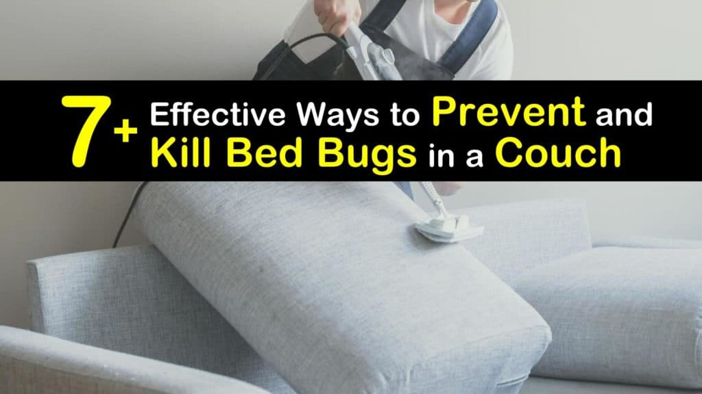 Kill Bed Bugs In A Couch, How To Get Rid Of A Sleeper Sofa