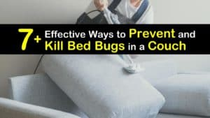 How to Get Rid of Bed Bugs in a Couch titleimg1
