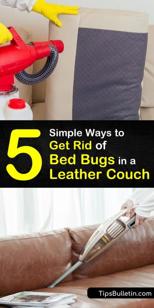 Discover how to kill bed bugs and prevent a bed bug infestation without calling an exterminator by vacuuming as soon as there are signs of bed bugs. Use a bed bug spray, and sprinkle diatomaceous earth for pest control. #leather #couch #getridof #bedbugs