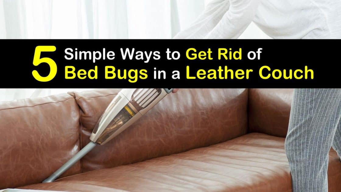 Bed Bugs In A Leather Couch, How To Get Rid Of Bed Bugs Sofa