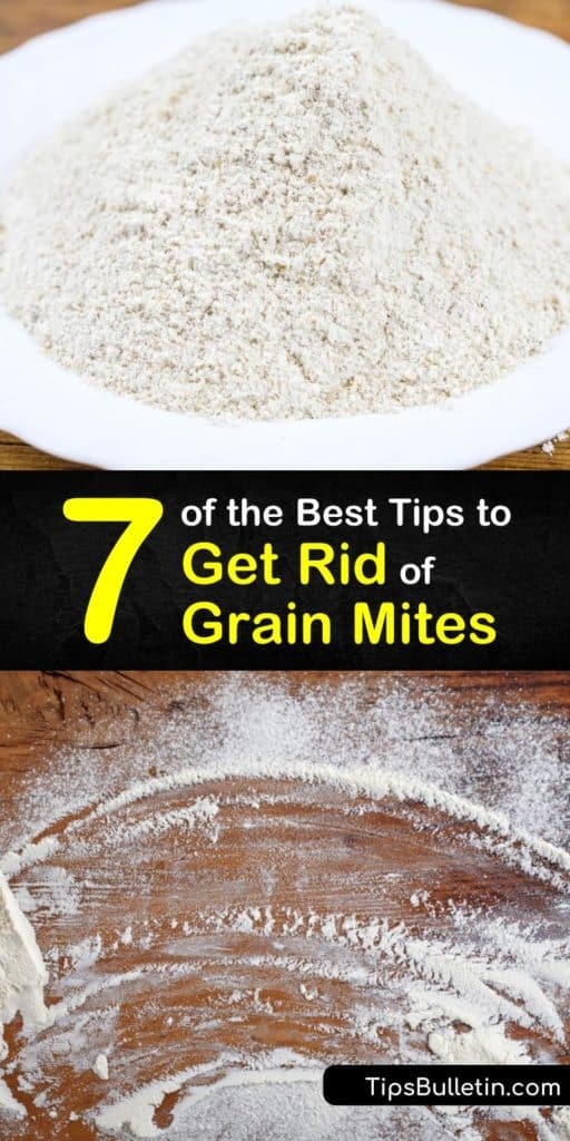 Learn how to get rid of flour mites fast with these tips and tricks. You need to act fast against a grain mite infestation, but the solutions are pretty simple - hot soapy water, bay leaves, and airtight containers. #getrid #grain #flour #mites #diy