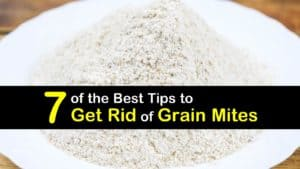 How to Get Rid of Grain Mites titleimg1