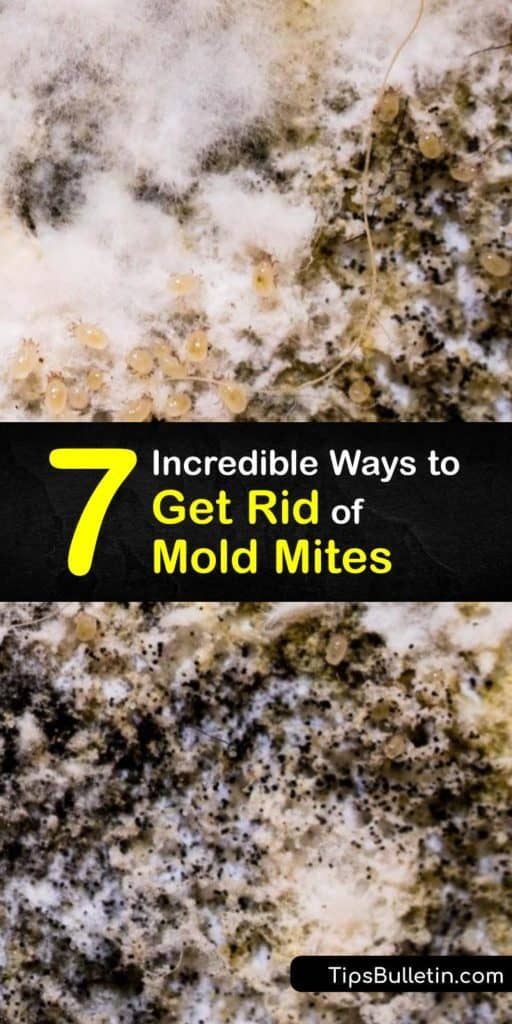 Find out how to get rid of mold mites by eliminating their food source. Try using Borax to remove mold and mildew from painted drywall or installing a dehumidifier to reduce humidity. Fix your mold problem to prevent an allergic reaction to mold spores. #mold #mites #howto #getridof