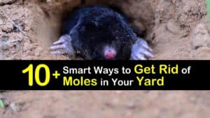 How to Get Rid of Moles in Your Yard titleimg1