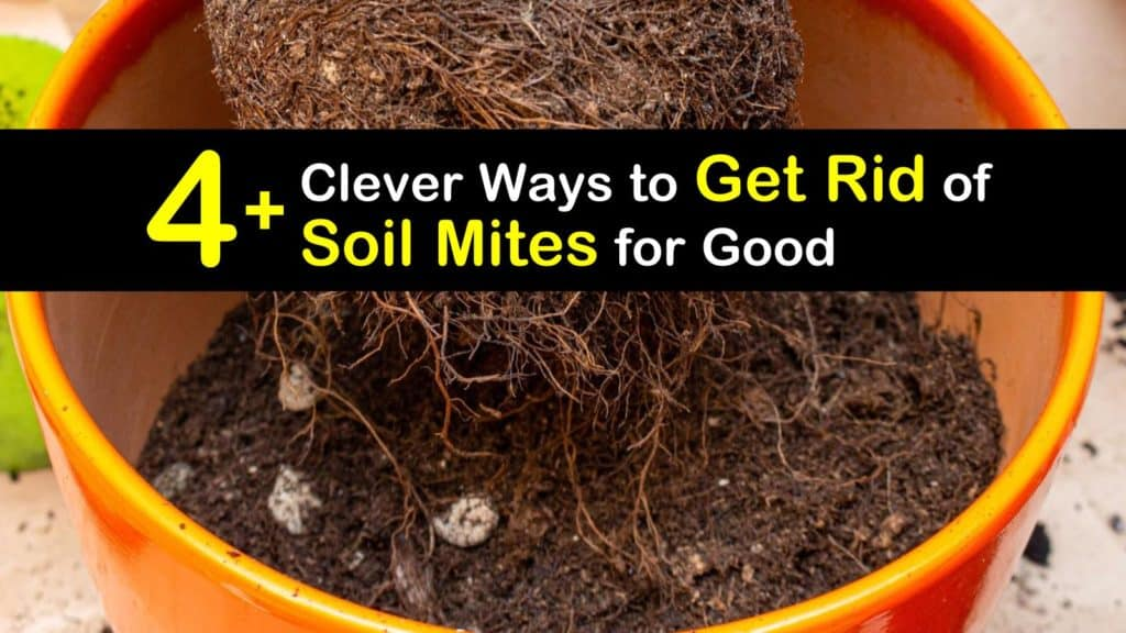 How to Get Rid of Soil Mites titleimg1