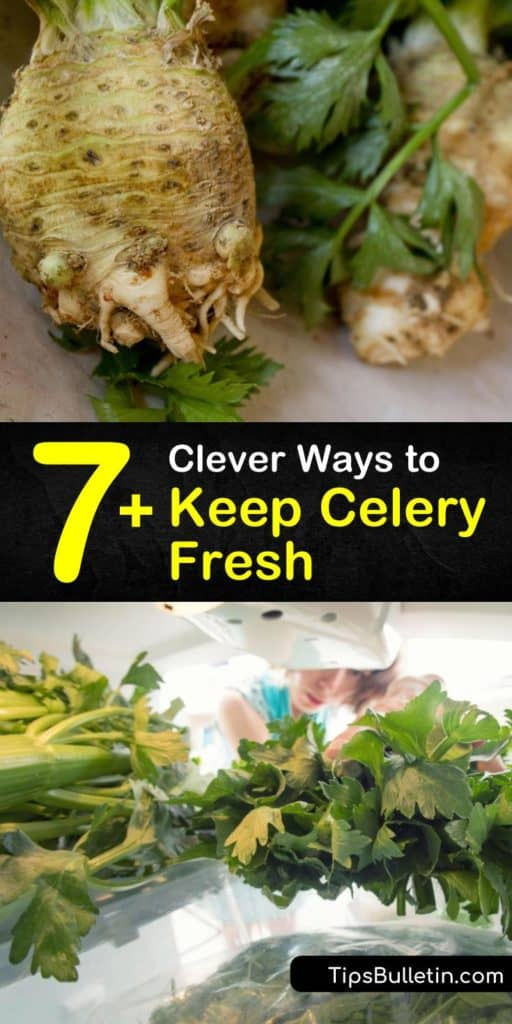 Discover how to keep celery crispy in the crisper drawer of your fridge. Keep these veggies in cold water in the fridge or wrap in foil, and avoid storing celery in the grocery store plastic bag to prevent ethylene gas from building up. #storing #celery #fresh