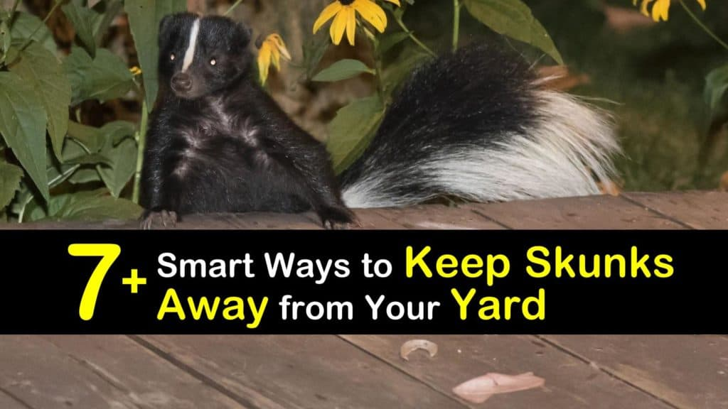 How to Keep Skunks Away from Your Yard titleimg1