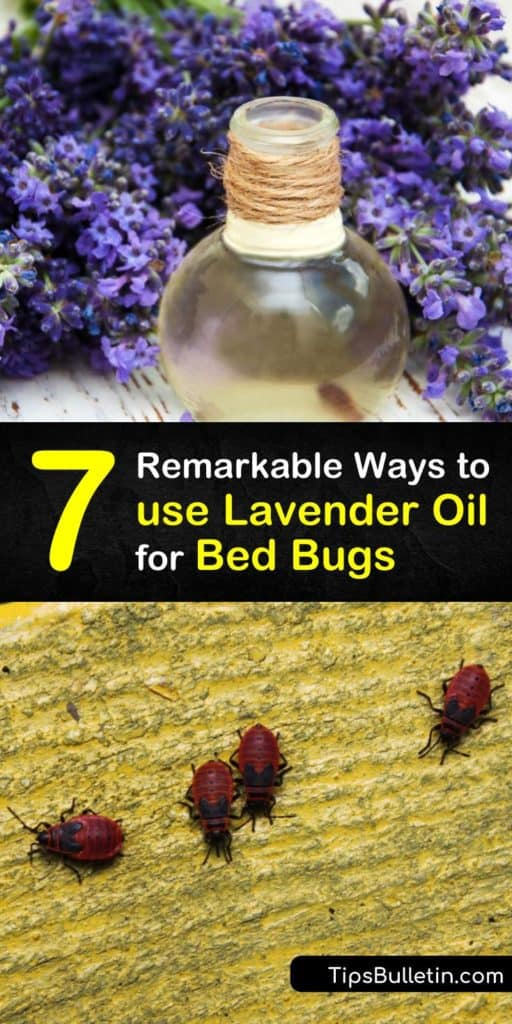 Learn how to use natural forms of pest control to repel bed bugs and avoid bed bug bites. Make a bed bug repellent with lavender oil and a spray bottle, and prevent a bed bug infestation by steam cleaning with essential oil. #lavender #oil #bedbugs