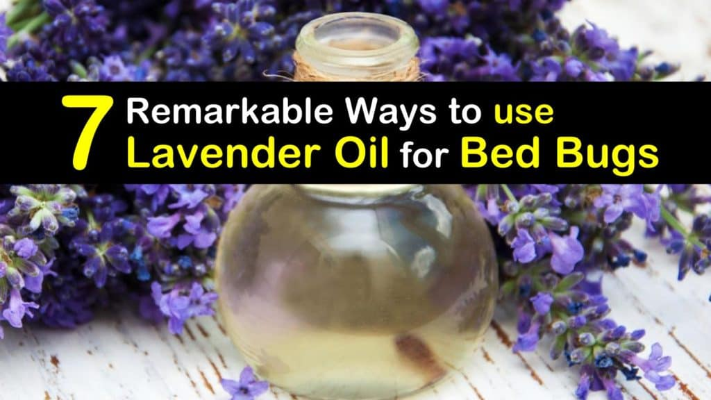 How to use Lavender Oil for Bed Bugs titleimg1