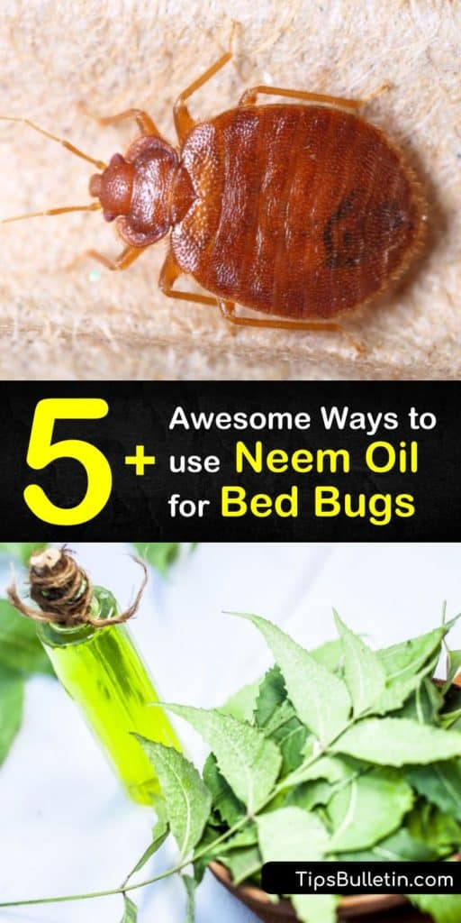Discover how to get rid of bed bugs by using neem oil, essential oils, and diatomaceous earth. Neem oil is one of the best ways to control a bed bug infestation. Learn several ways to use neem oil against bed bugs. #bedbugs #neemoil #pestcontrol