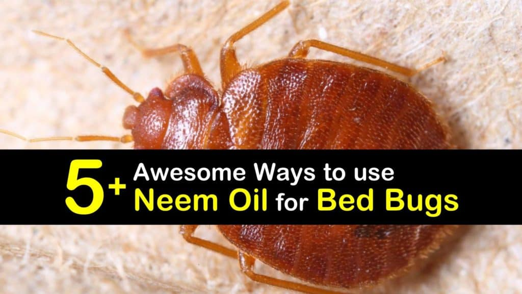 How to use Neem Oil for Bed Bugs titleimg1