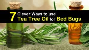 How to use Tea Tree Oil for Bed Bugs titleimg1