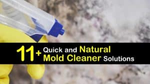 Natural Mold Cleaner titleimg1