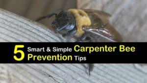Carpenter Bee Prevention titleimg1