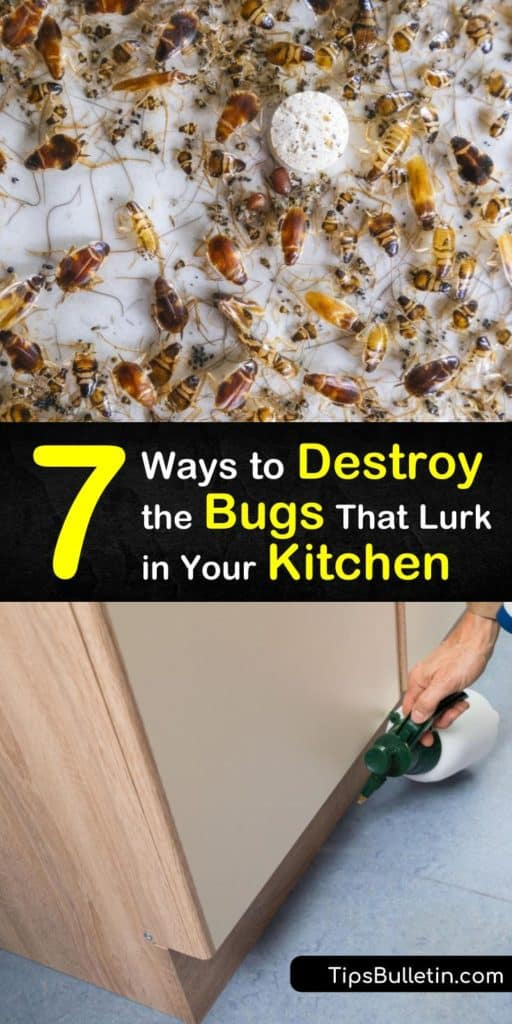 Discover how to kill all types of pantry pests and critters, such as fruit flies and Indian meal moths using DIY repellents and insecticides. Prevent them from returning with bay leaves and keep food safe in airtight containers. #kitchen #bugs #repel #getridof