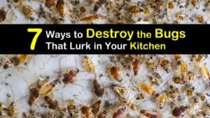 Get Rid of Bugs in the Kitchen titleimg1