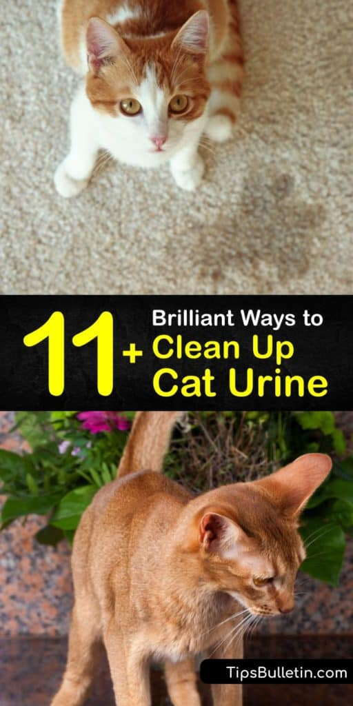 Use these amazing DIY methods to get rid of cat urine odor and cat pee stains with household items like dish soap, a spray bottle, and paper towels. If your cat refuses to use their litter box, spraying an enzyme cleaner quickly disinfects the affected area. #cleaner #cat #urine #homemade