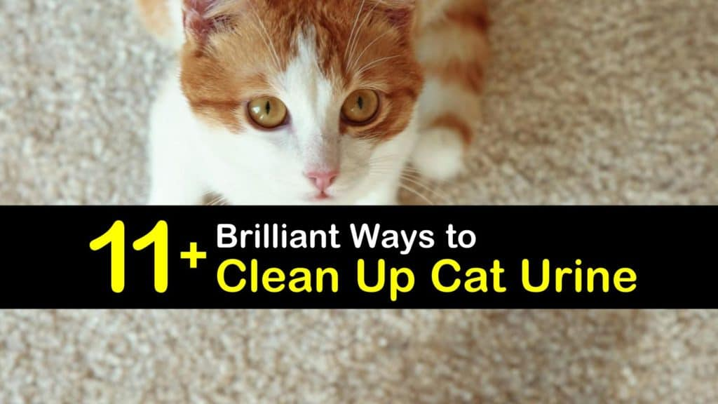 Homemade Cat Urine Cleaner titleimg1