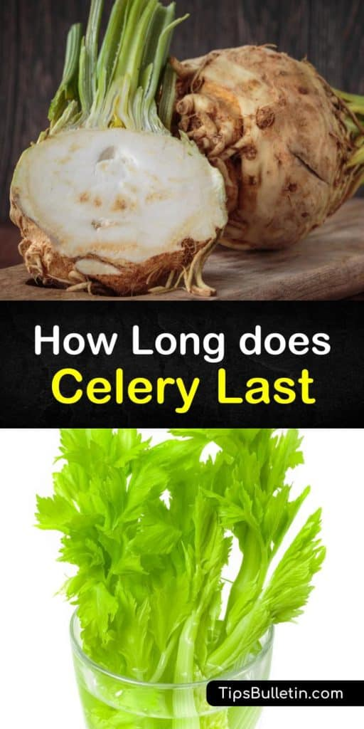 Find out why you shouldn't store your celery stalks in a plastic bag. Instead, use a damp paper towel or ice water. Learn how to keep your celery fresh with these incredible food storage tips. #howlong #celery #last