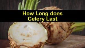 How Long does Celery Last titleimg1