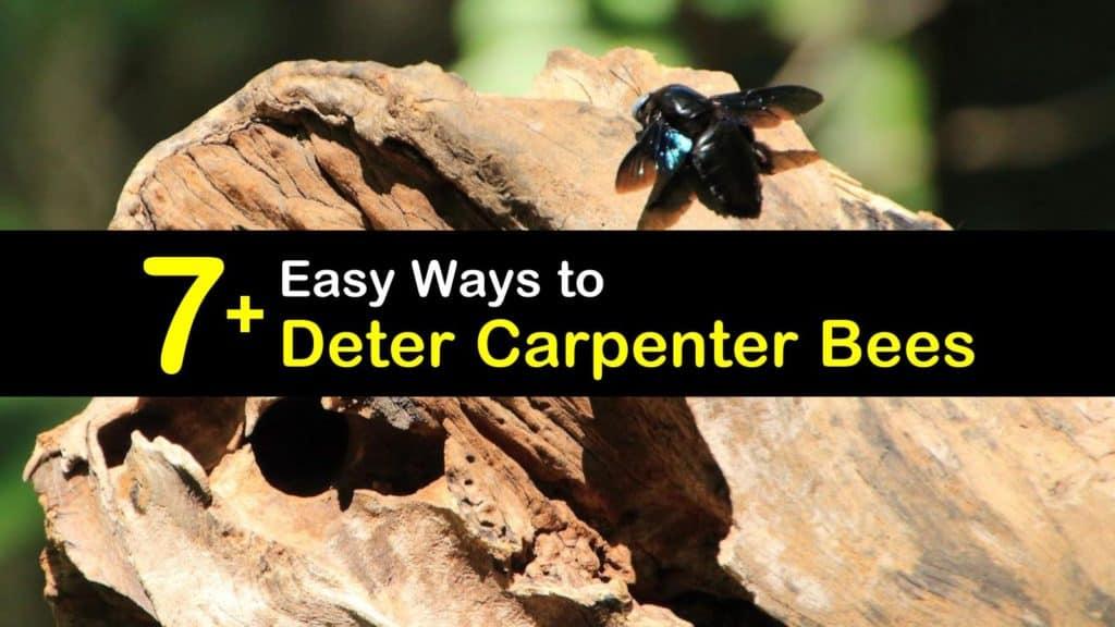 How to Deter Carpenter Bees titleimg1