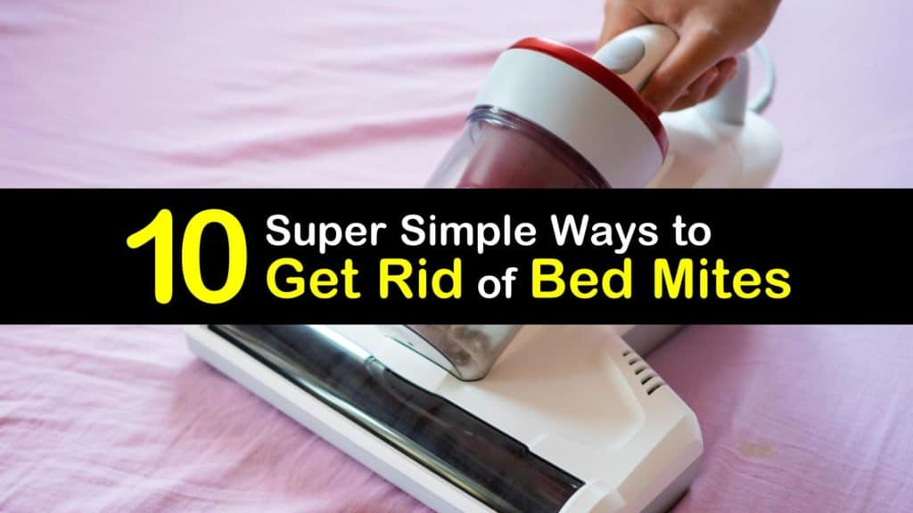 How to Get Rid of Bed Mites titleimg1