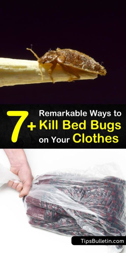 Learn what kills bed bugs on clothes to avoid a future bed bug infestation. Clean clothes are a must, and all you need is a washing machine set on high heat. No need to head to the laundromat! #howto #getridof #bedbugs #clothes