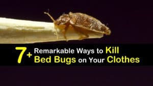 How to Kill Bed Bugs on Clothes titleimg1