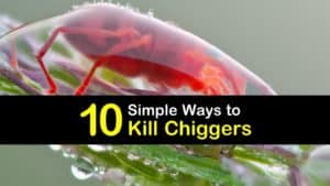 How to Kill Chiggers titleimg1