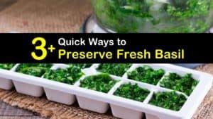 How to Preserve Basil titleimg1