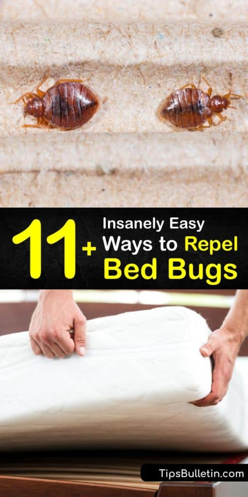 Learn how to repel and kill bed bugs that have infested your bed frames or box spring. Insecticide and pesticide repellent are common products to use on a bed bug infestation. However, rubbing alcohol and diatomaceous earth prevent bed bugs. #howto #repel #bedbugs
