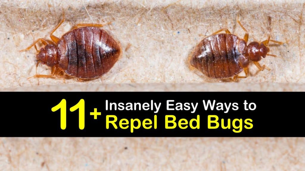 How to Repel Bed Bugs titleimg1