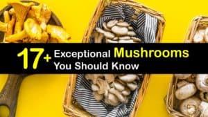 Common Types of Mushrooms titleimg1