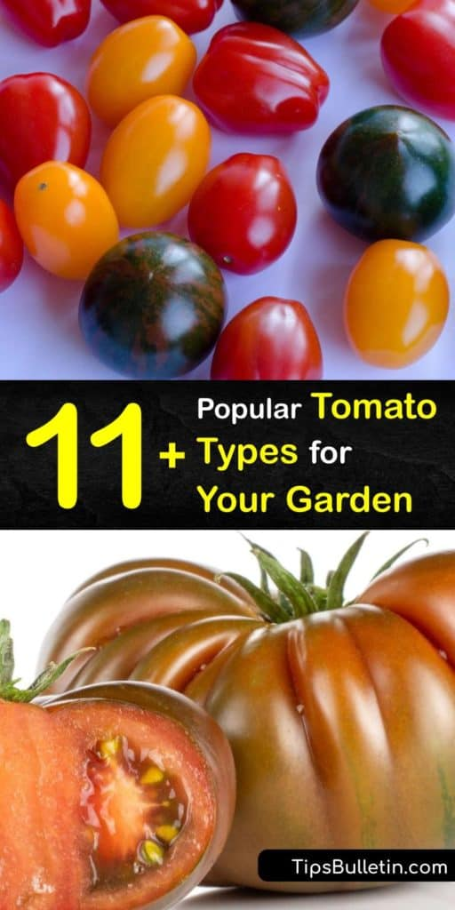 Discover the different types of tomatoes. From Brandywine, Roma, and Cherokee Purple, we provide the most flavorful tomatoes. Beefsteak tomatoes are meaty, while determinate tomatoes, like Romas, are smaller. Hybrid tomato plants have more disease resistance. #tomato #common #types