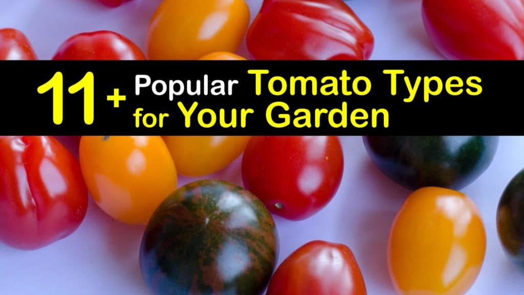 Common Types of Tomatoes titleimg1
